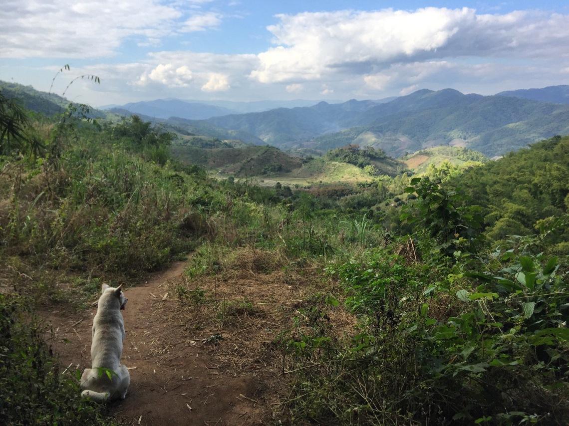 Chiang Rai Trek