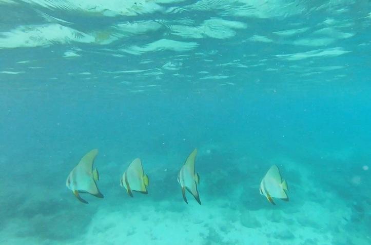 Pulau Weh 3